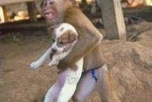 Thai Animals