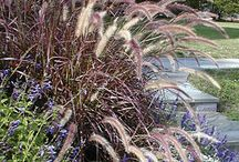 Grasses / Soft plants