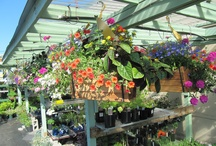 WoW Hanging Baskets at Turley's