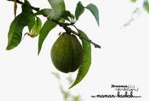 Fruits, légumes, nature, jardin, potager