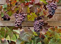 Garden - Grapes