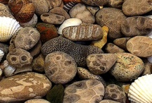 Images - Rocks & Shells / by Holly Gilbert