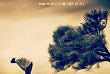 Mahmud Efendi