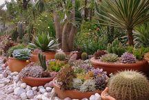 Vet plant tuin