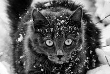 Cat lover ♡