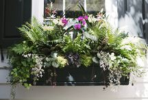 Charleston Gardens / by Sawgrass Bakery
