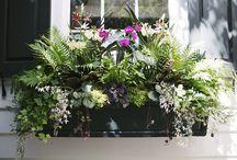 Charleston Gardens / by Sawgrass Bakery