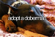 Dober-kids / Stuff for my dobermans / by Steph T