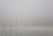Naturaleza_Nature / Arboles. Luz. Flores. Animales. Viento. Nubes