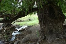Lugares paradisiacos / Imagenes hermosas