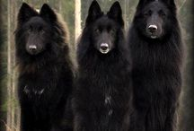 Wolves n Dogs