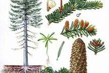 projekt stromy