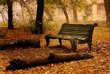 Autumn / by Vanessa Brinon