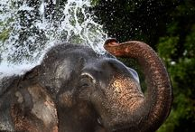 All about Elephants! / by Tonya