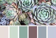 Colour Schemes Paint