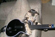 CAT Guiter