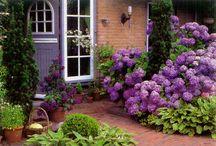 Кустарники для сада / Красиво цветущие кустарники и деревья