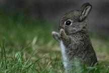 Cute animals <3 / adorable animalsss :D awwwww sooo cute  <3 :3 / by Kat Liske