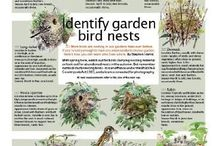 Helping wildlife / Ideas for helping wildlife in the garden including plants and flowers to grow, creating wildlife ponds and wildflower meadows.