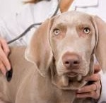 Petcare / Taking care of your pooch during the summer months!