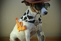 Jack russell,tremendoooooo!!!!! / Il cane più pazzo e simpatico del mondo
