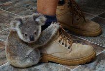 Christina loves koalas