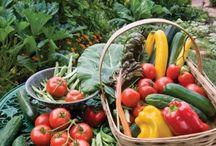 Green Thumb / Gardening & Landscape / by Heather Sullivan