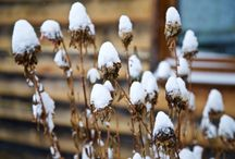 #PhotoMIRA /ЗИМА В ГРИБАНОВО/ / Зима в Грибаново.  Фотограф Ирина Майсова (Irina Maysova) #photomira