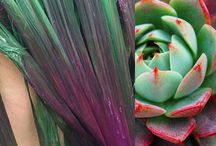 Succulent Hair / Rainbow hair styles inspired by succulent plants such as cactus