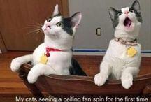 Кошачьи мемы