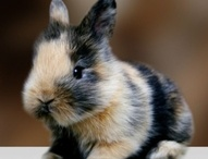Bunnies / by Middendorf Animal Hospital