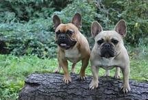 Dogs / by Marla Tafelski-Ostrowski