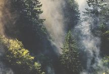 Discovering nature / We heart our Discover the Forest campaign. Check out some of our forest inspo and get outside! / by Ad Council