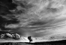 le vent/ mouvement