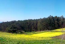 #costadamorte #caminodesantiago#lires #AsEirasLires #Galicia