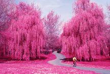 розовый фантан