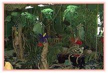 Classroom Rain Forest