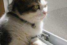 Cat ゴン / 初代我が家の猫、ゴン。 今は実家に拉致監禁(笑)。