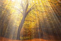 Nature..You Amazing!
