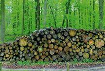 Frühlingswald XXL