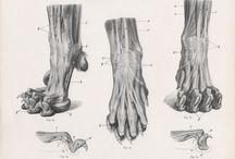 Anatomy ref & tuts