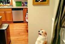 Funny Dog Pictures / pictures of funny dogs | funny dog memes | funny dog quotes | funny dogs with captions