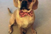 Pets in Bow Ties / Who doesn't love a cute animal in a bow tie? Take a look on our website at some designs....http://knotcool.co.uk/shop/product-category/pets/ / by KnotCool Bow Ties