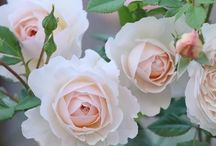 растения (цветы)