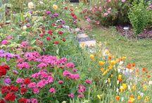 Landelijke tuin / Cottages garden