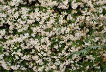 floral gems / by agirlnamedtor