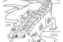 Ideas for wild animal quilt