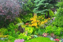 Rozaneczniki / kwiaty wiosny
