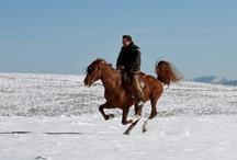 Horses & Gredos / Paisajes, lugares, momentos, amigos, caballos, sensaciones... un pequeño ejemplo de todo lo que se puede disfrutar en Gredos a Caballo
