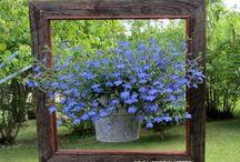 garden it up / by Jessica Holsinger